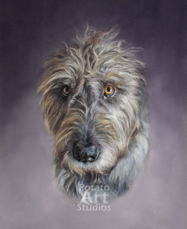 Irish Wolfhound  Clairefontaine Pastelmat Sennelier Pastel Derwent Stabilo CarbOthello Faber Castell PITT pencil dog portrait drawing realism potato art studios
