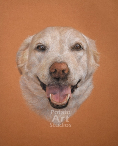 Lab colored pencil Faber Castell Polychromos Caran d Ache Luminance Prismacolor dog portrait drawing realism potato art studios