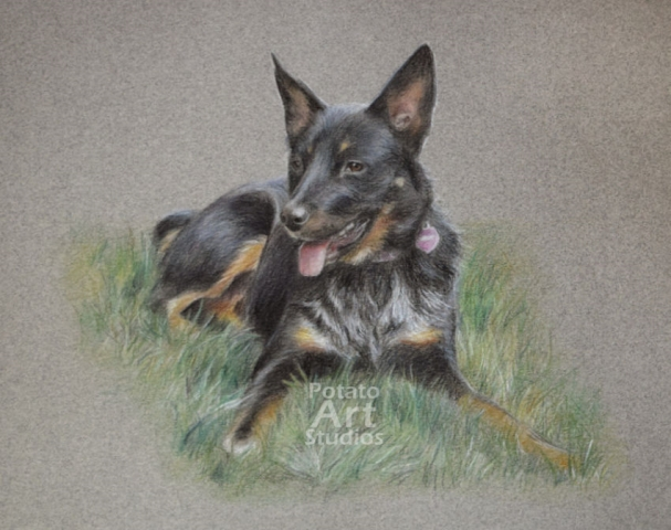 colored pencil Faber Castell Polychromos Caran d Ache Luminance Prismacolor dog portrait drawing realism potato art studios