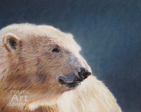 polar bear Pastel pencil conte stabilo carbothello Derwent faber castell PITT Sennelier portrait drawing realism potato art studios