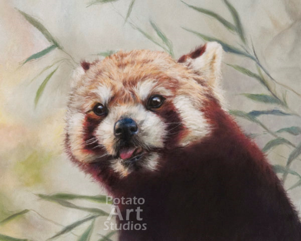 red pand Pastel pencil conte stabilo carbothello Derwent faber castell PITT Sennelier portrait drawing realism potato art studios