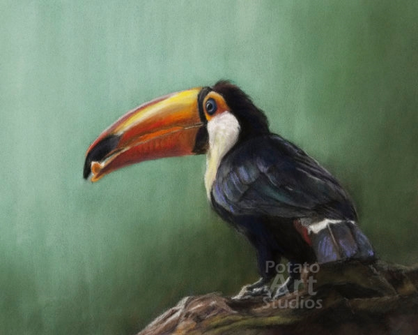 toucan tropical bird Pastel pencil conte stabilo carbothello Derwent faber castell PITT Sennelier portrait drawing realism potato art studios