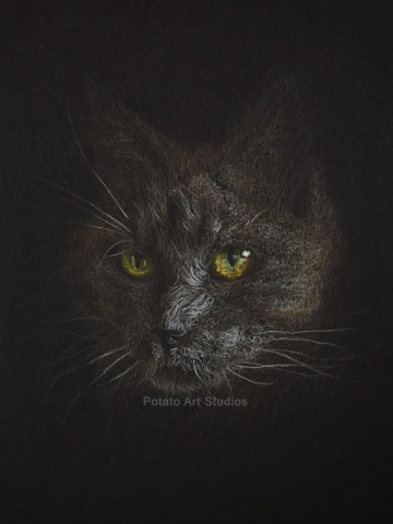 Cat Portrait Drawing Colored Pencil Coloredpencil Prismacolor Potato Art Studios