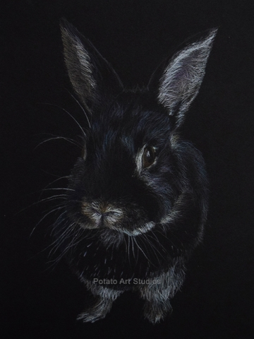 Dwarf Rabbit Pet Portrait Drawing Colored Pencil Coloredpencil Prismacolor Potato Art Studios PotatoArtStudios