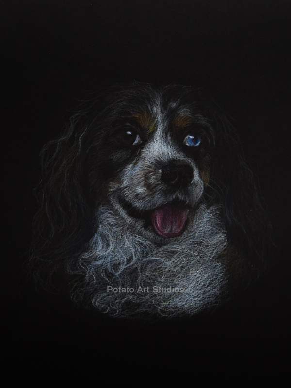Dog Portrait Drawing Colored Pencil Coloredpencil Prismacolor Potato Art Studios