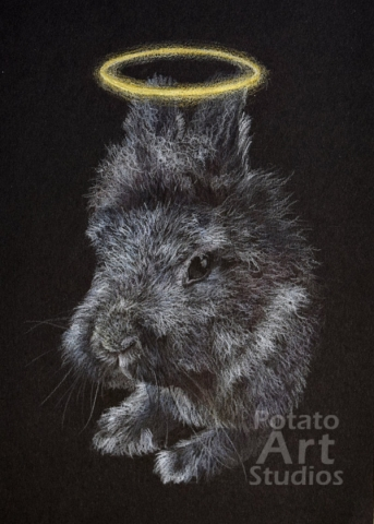 rabbit colored pencil Faber Castell Polychromos Caran dAche Luminance Prismacolor portrait drawing realism potato art studios black paper artagain strathmore