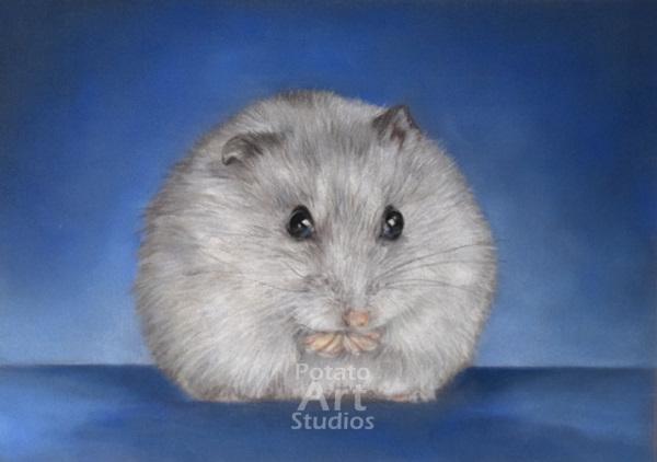 hamster Pastel pencil conte stabilo carbothello Derwent faber castell PITT Sennelier portrait drawing realism potato art studios