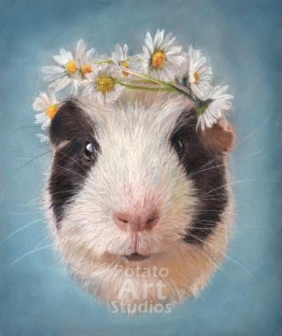 guinea pig  Pastel pencil conte stabilo carbothello Derwent faber castell PITT Sennelier portrait drawing realism potato art studios