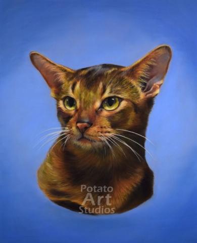 Abyssinian Clairefontaine Pastelmat Sennelier Pastel Derwent Stabilo CarbOthello Faber Castell PITT pencil cat portrait drawing realism potato art studios