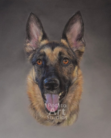 Dog Pastel pencil conte stabilo carbothello Derwent faber castell PITT Sennelier portrait drawing realism potato art studios