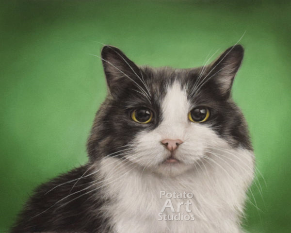 Cat Pastel pencil conte stabilo carbothello Derwent faber castell PITT Sennelier portrait drawing realism potato art studios potatoartstudios