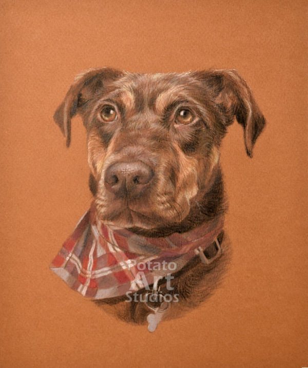 Dog colored pencil Faber Castell Polychromos Caran dAche Luminance Prismacolor portrait drawing realism potato art studios