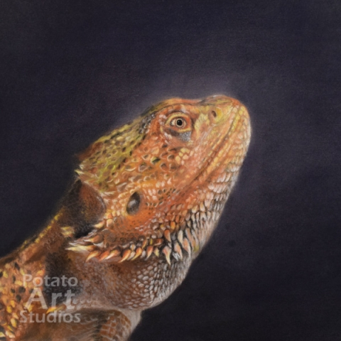 bearded dragon beardeddragon lizard  Pastel pencil conte stabilo carbothello Derwent faber castell PITT Sennelier portrait drawing realism potato art studios