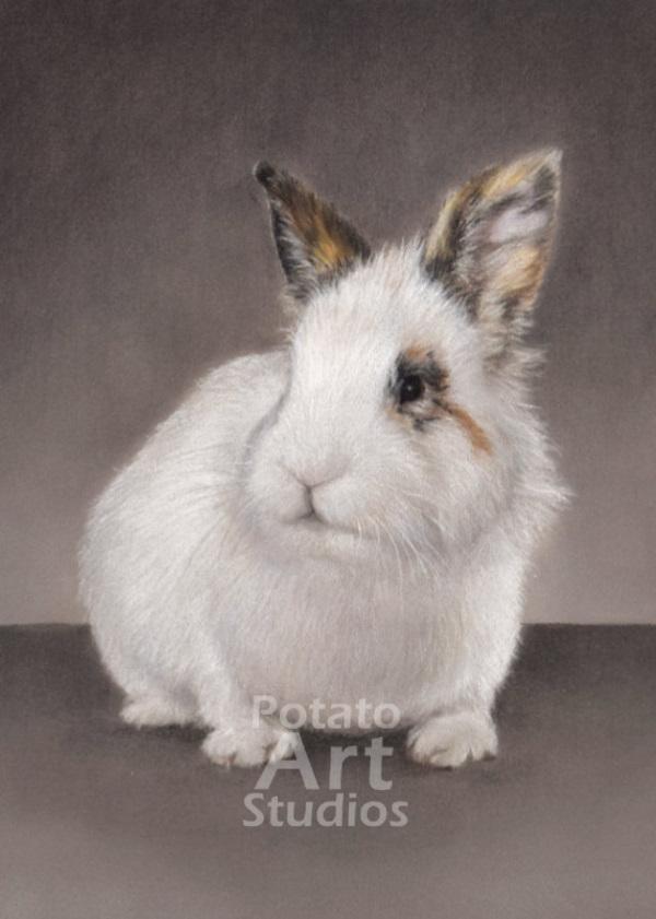 rabbit bunny Pastel pencil conte stabilo carbothello Derwent faber castell PITT Sennelier portrait drawing realism potato art studios
