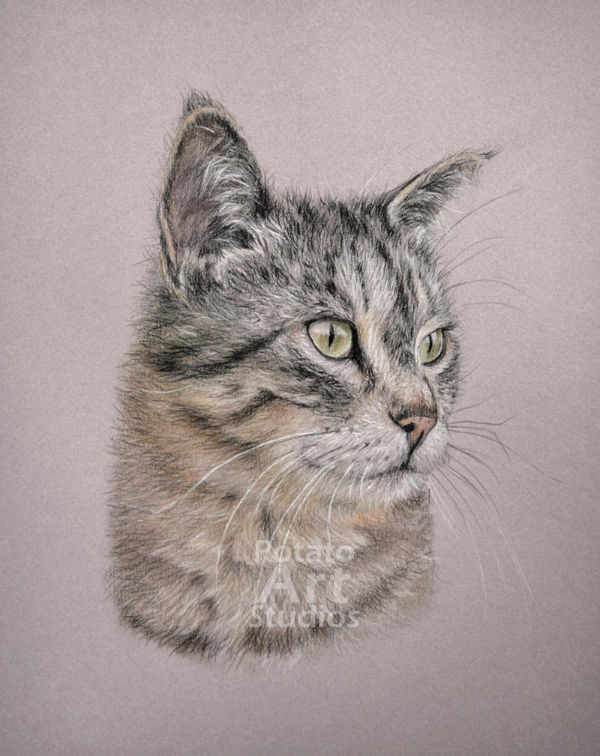 cat colored pencil Faber Castell Polychromos Caran dAche Luminance Prismacolor portrait drawing realism potato art studios