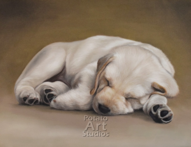Dog Pastel pencil conte stabilo carbothello Derwent faber castell PITT Sennelier portrait drawing realism potato art studios potatoartstudios lab Labrador retriever