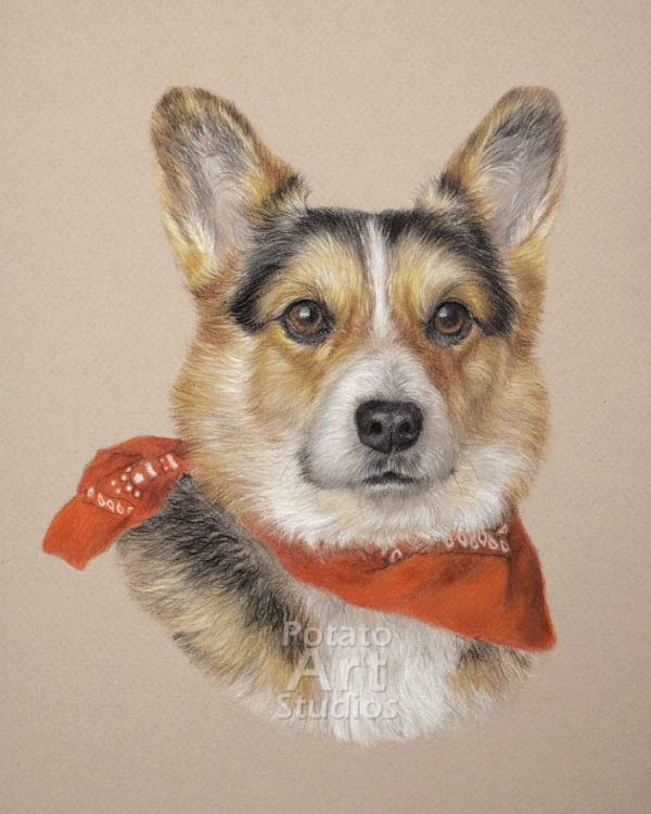 Dog colored pencil Faber Castell Polychromos Caran dAche Luminance Derwent portrait drawing realism potato art studios corgi