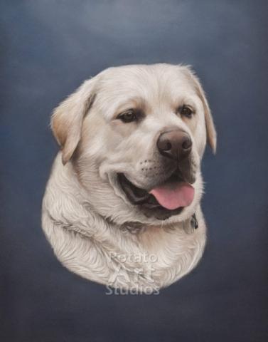 labrador Dog Pastel pencil conte stabilo carbothello Derwent faber castell PITT Sennelier portrait drawing realism potato art studios